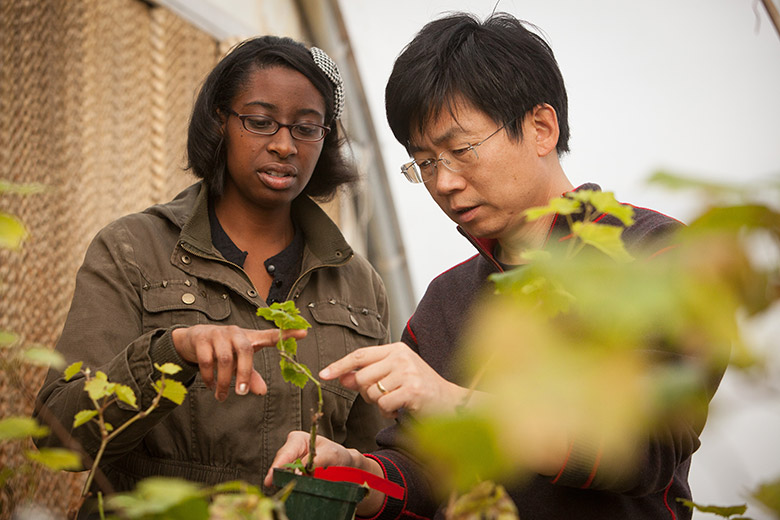 Dr. Qiu working with student