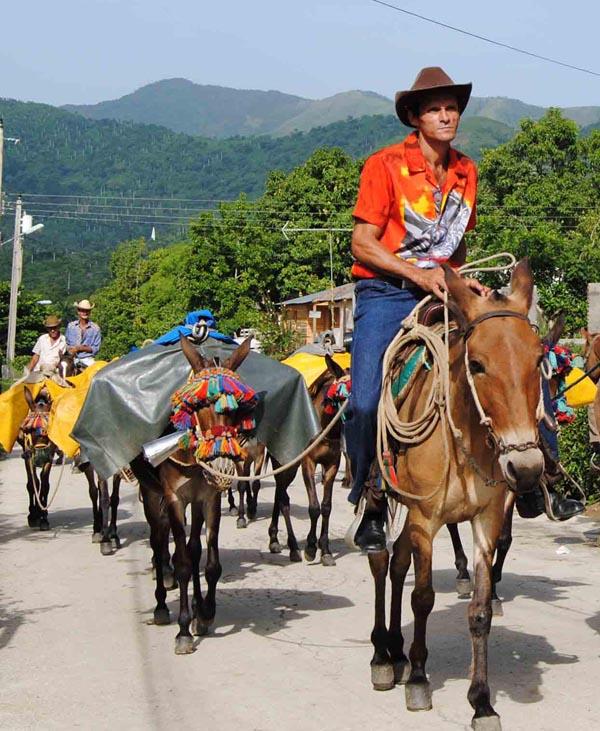 Image result for arria de mulos en Cuba