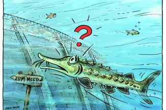 Der Naturschutz in der EU darf nicht davonschwimmen! Bild: Fred Fuchs