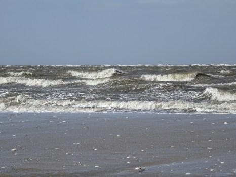 Sanderlinge (Calidris alba) am Strand von Trischen II