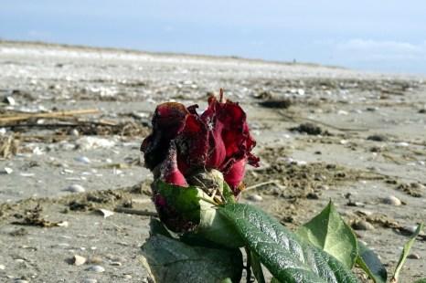 Rote Rosen am Strand deuten meist eine vergangene Seebestattung an.