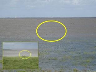 Normalerweise bleibt die Tarnnetz-Konstruktion auch bei Hochwasser über Wasser.