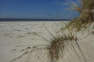 … und noch mehr Sommerstimmung (Foto: Tore J. Mayland-Quellhorst).