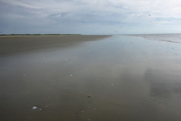 Glatter, feuchter Strand (Foto: Tore J. Mayland-Quellhorst).