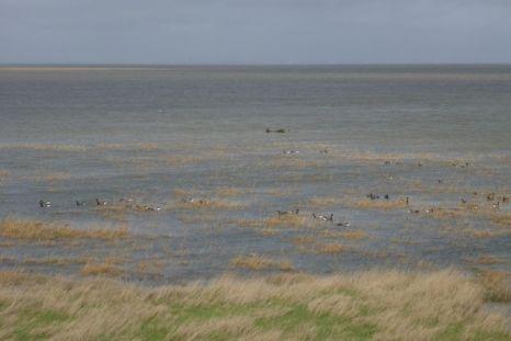 Land-unter: Salzwiese steht unter Wasser (Foto: Tore J. Mayland-Quellhorst).