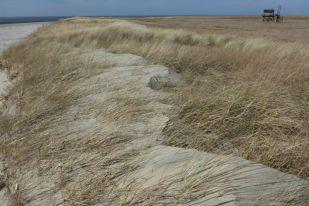 Sandüberwehung auf Süd-Düne (Foto: Tore J. Mayland-Quellhorst).