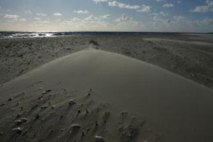 Parabelförmige Sandwehe hinter Grasbüschel (Foto: Tore J. Mayland-Quellhorst).
