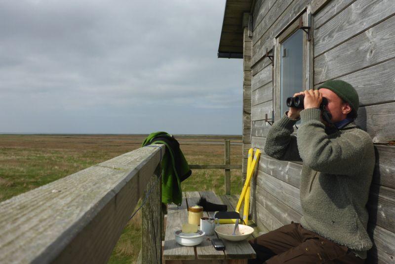 Bird-sit, statt Bird-race auf Trischen (Foto: Tore J. Mayland-Quellhorst).