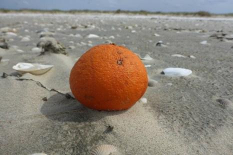 mandarine_web