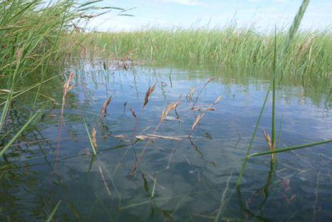 Ein Fluss? Nein, nur der Weg unter Wasser bei 70 cm über mittlerem Hochwasser (Foto: Tore J. Mayland-Quellhorst).