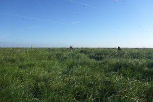 Kette bei der Suche nach Löfflernestern (Platalea leucorodia; Foto: Tore J. Mayland-Quellhorst).