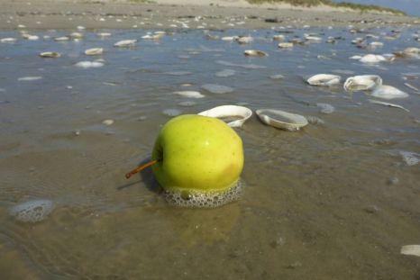 En frisker Appel an'n Strand (Foto: Tore J. Mayland-Quellhorst).