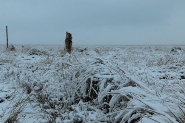 Strandquecke im Schnee (Foto: Jonas Kotlarz)