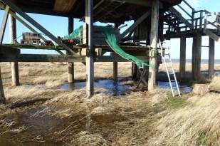 Das erste Hochwasser mit etwa 70 cm über dem Mittleren Hochwasser am 05. 04. (Foto: Jonas Kotlarz)