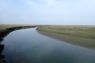 Inselpriel (Foto: Jonas Kotlarz)