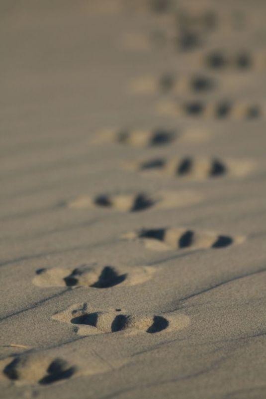 Spuren im Sand (Foto: Jonas Kotlarz)