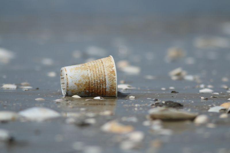 Einwegbecher aus Plastik am Strand von Trischen (Foto: Jonas Kotlarz)