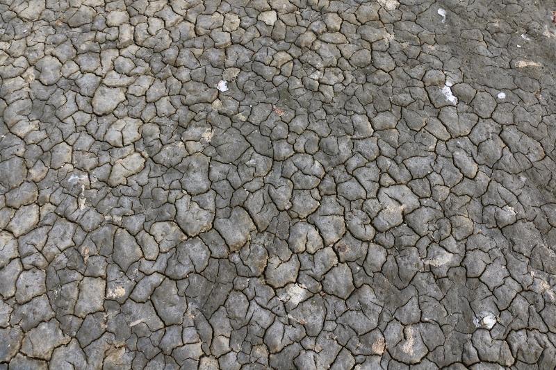 Trockenheit in der Salzwiese (Foto: Jonas Kotlarz)