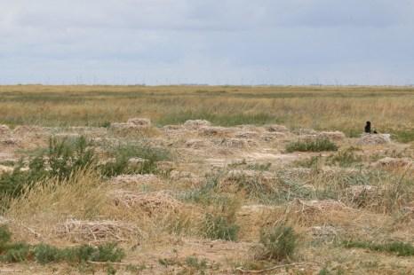 Die Kormoran-Kolonie (Phalacrocorax carbo) nach der Brutsaison (Foto: Jonas Kotlarz)
