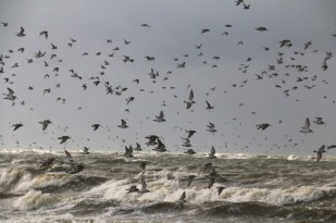 Rastvögel auf Trischen (Foto: Jonas Kotlarz)