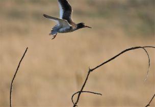 schwierige Landung (Foto: A. de Walmont)
