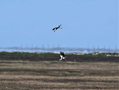 Landung (Foto: A. de Walmont)
