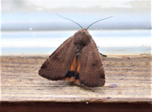Hausmutter - mit hübschen Unterrock in der Hütte (Foto: A. de Walmont)