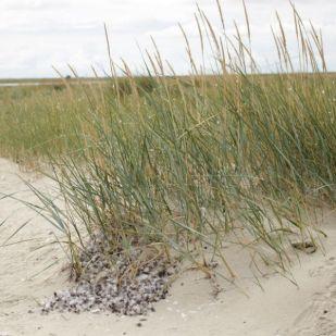 Federn sammeln sich am Strand
