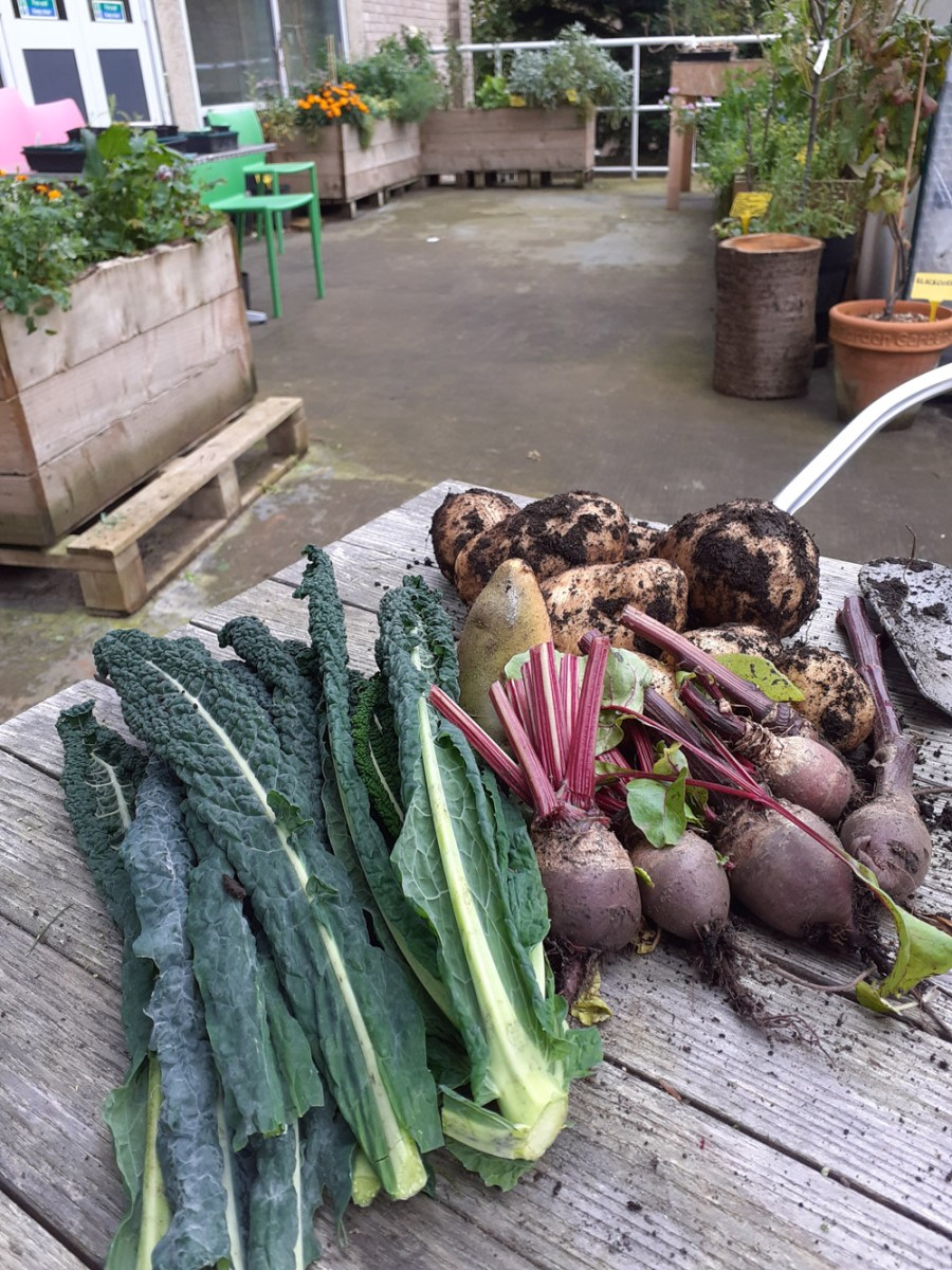 Produce from the allotment
