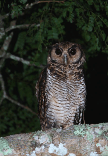 "Owls may not go ""bump"" in the night but they certainly add to the atmosphere."