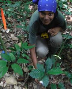 Tagging the sapling and measuring diameter using the calipers