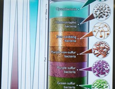 Soil as live entity