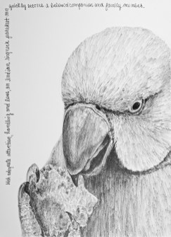 """Nesting #17, graphite on paper, 9"""" x 12"""", 2020, $250 on frame, $300 with frame"""