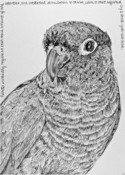 """Nesting #8, graphite on paper, 9"""" x 12"""". 2019, $250 without frame, $300 with frame"""