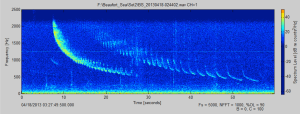 Bearded_Seal-Spectrogram-cropped