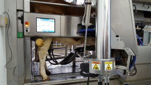 A cow in an automated milking unit.