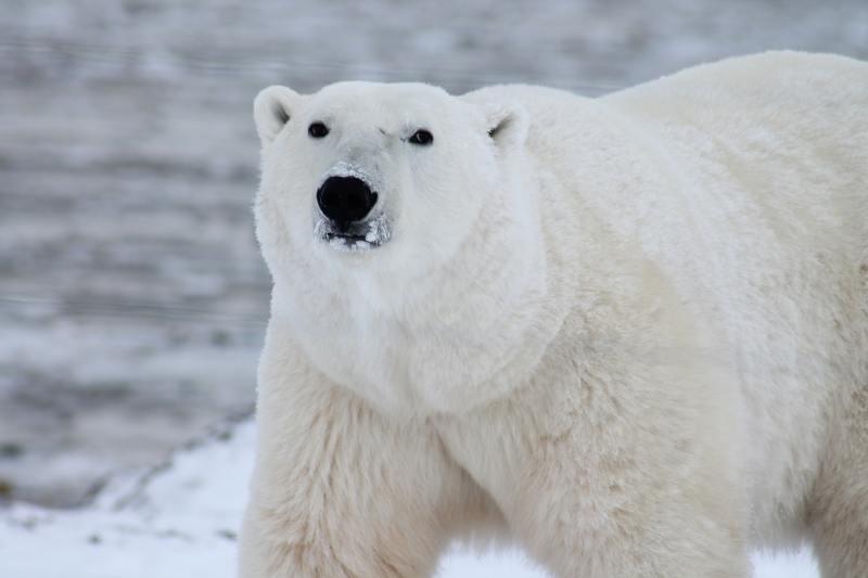 polar bear dreamforce 2018