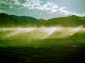Late Afternoon Toned Photo Of California Farm With Irrigation