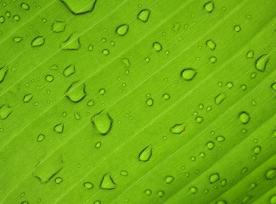 Wet Leaf@1x.jpg