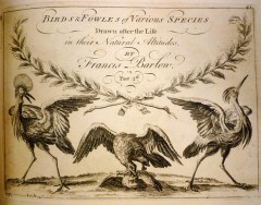 Birds & Fowles of Various Species (Part 2)