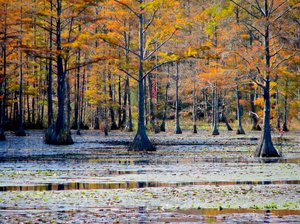 Freshwater wetlands can release methane, a potent greenhouse gas, as the planet warms. (Image source: RGBstock.com)