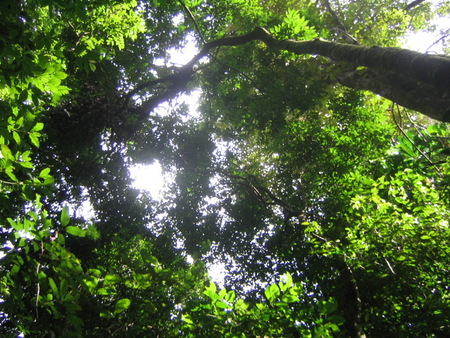 Rainforest photo