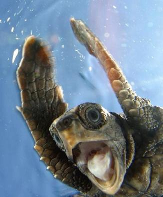 Image result for happy turtle