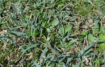 Spot 10 in grazed grassland