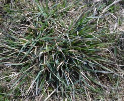 Spot 27 in heathland