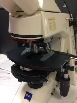 Light microscopy can be used to identify the majority of powdery mildew species