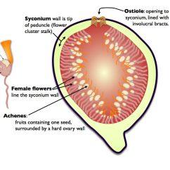 Parts Of An Orange Fruit Diagram Doorbell Wiring Schematic News  Herbology Manchester