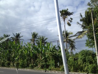 Along the roadsides of Bali rural area. Picture by Liew.