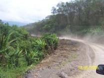 Banana herbs along roadsides- Sipitang, Sabah. Picture by Liew.