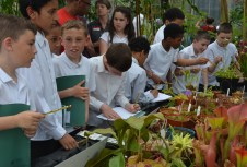 The carnivorous plants in the low nutrient area were very popular